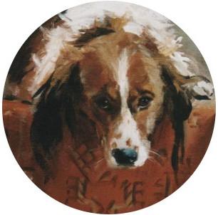 Dierenportretten